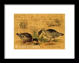 Mallards And Swan Collage Framed Print at Fine Art America © Sarah Vernon